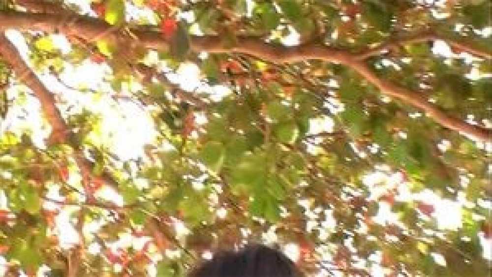 平山藍里「Angelの画像5
